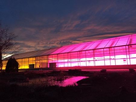 Greenhouse HPS and LED lights