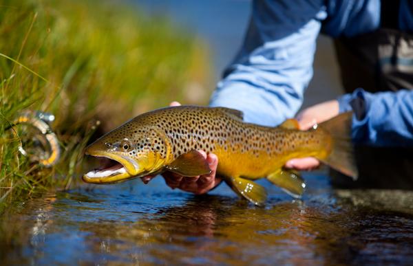 May 2012 pasadena casting club for Best fishing in utah