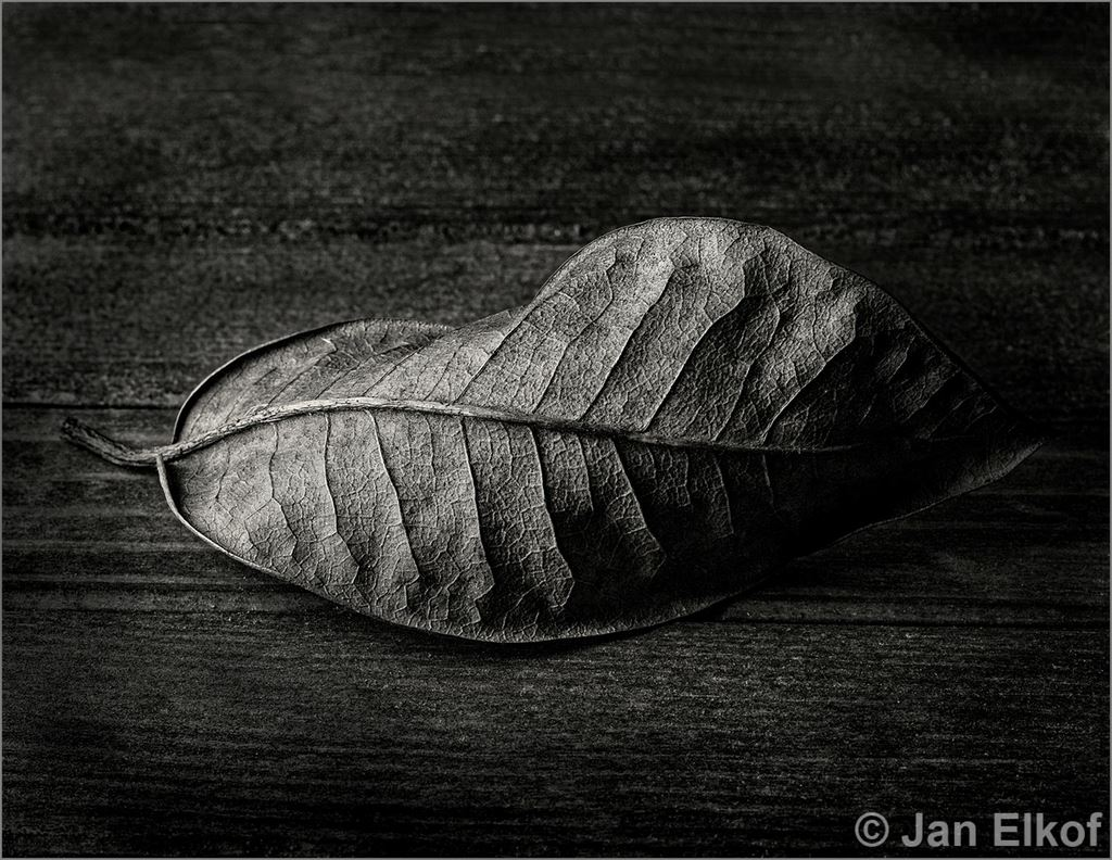 Monthly Monochrome October 2020