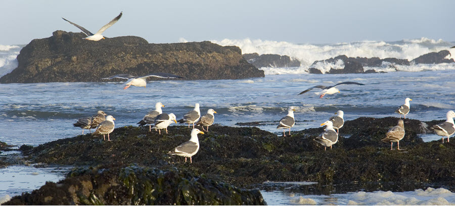 Birds At Tidepool