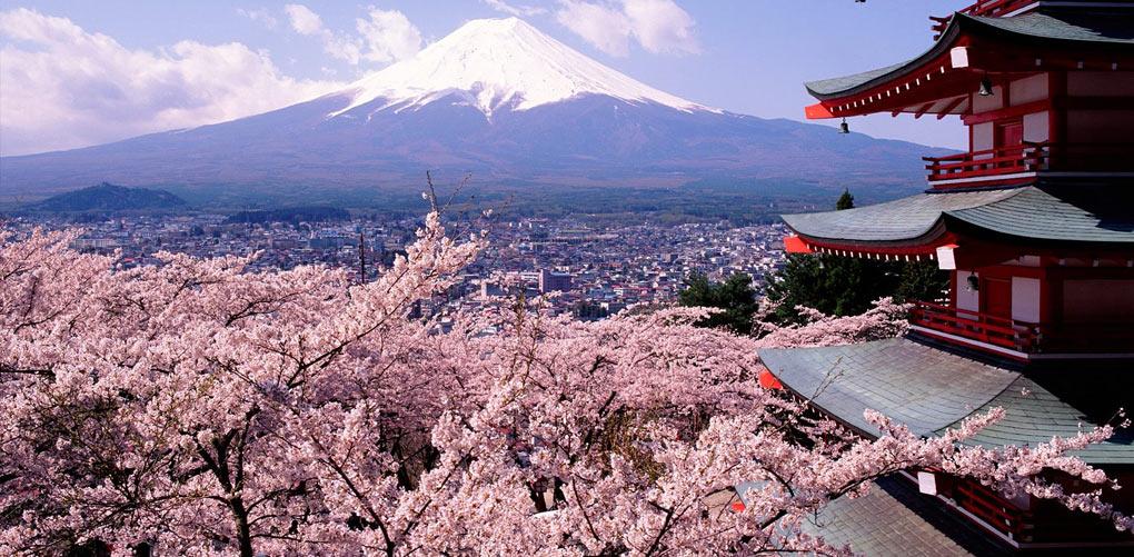 Tokyo Cherry Blossums