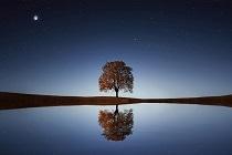 single tree s
