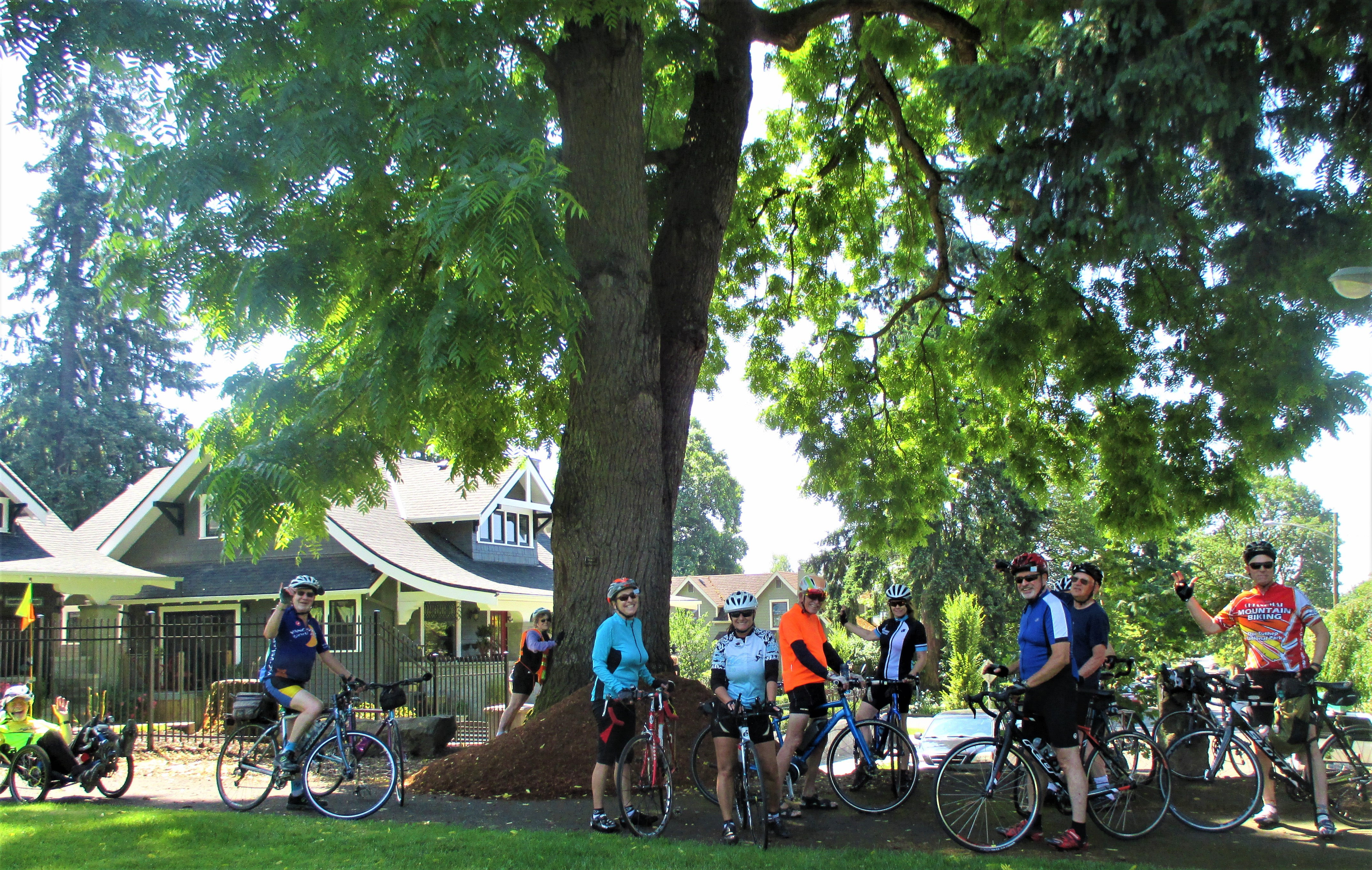 Old Walnut tree VBC ride