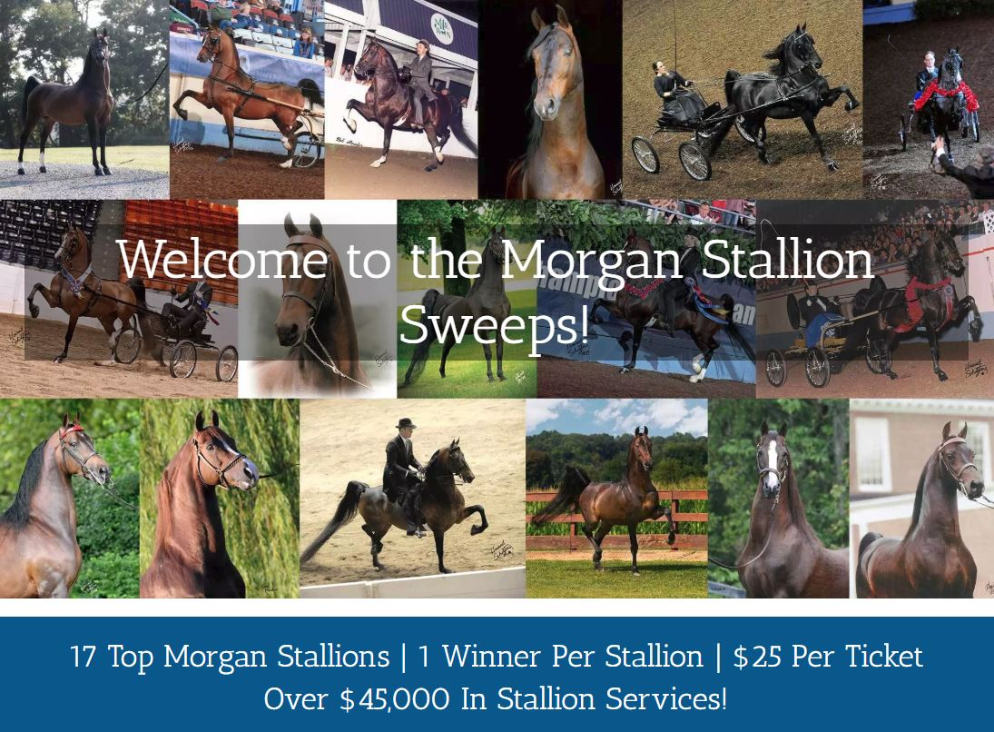 Morgan Stallion Sweeps