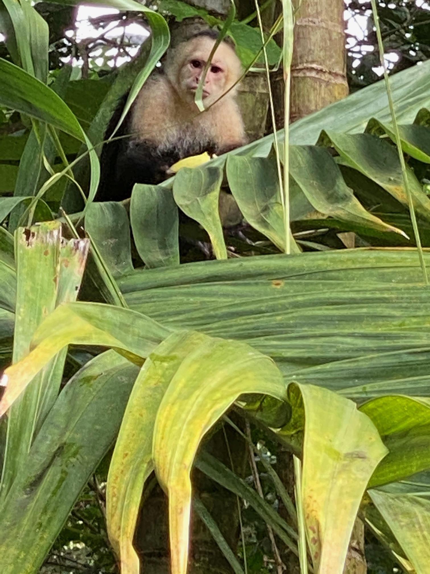 Monkey pic 1