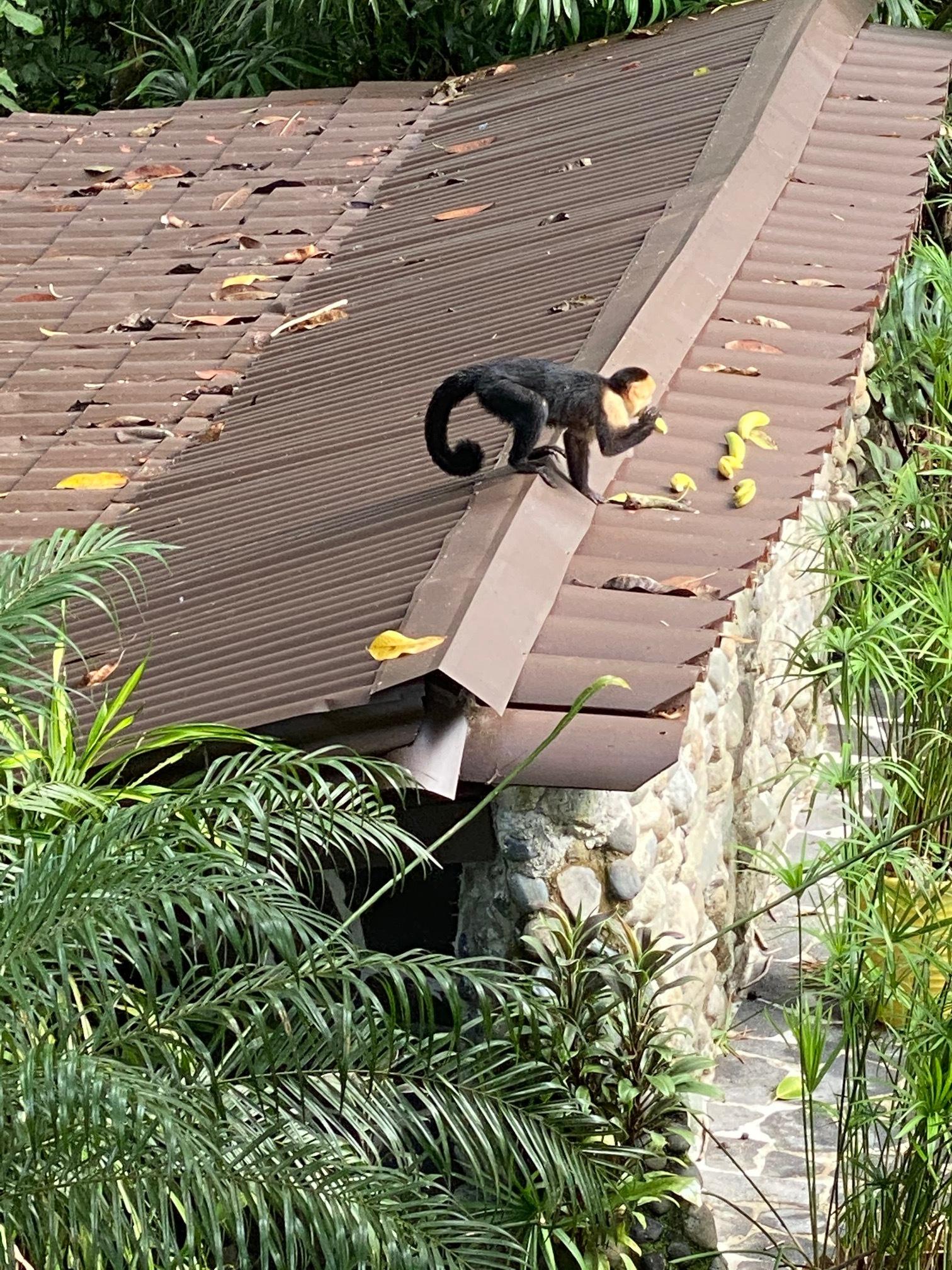 Monkey pic 2