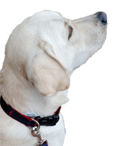 Dog Nylon and Ribbon Collar - click to view details