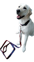 Dog Leash - click to view details