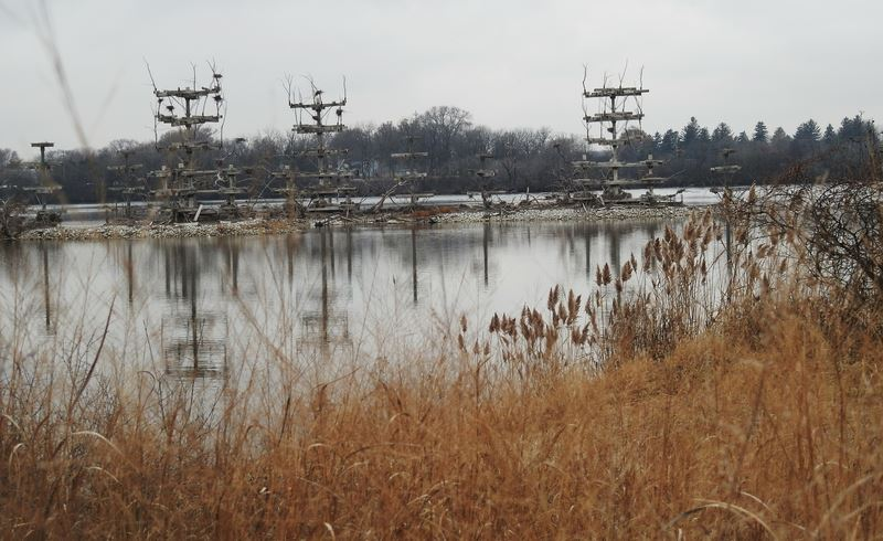 Heron_Roosts_Lake_Renwick_1842030930.JPG