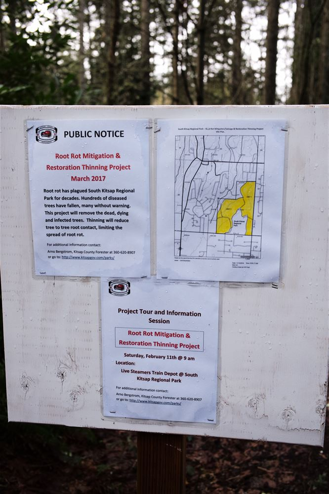 Here are several views of the logging to remove diseased trees at South Kitsap Regional Park.  The logging took place from April through June of 2017.