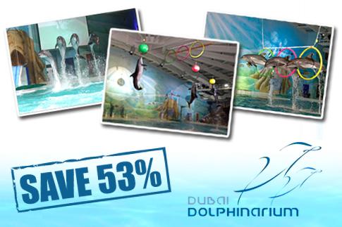 53% at Dubai Dolphinarium