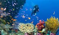 Curso de Buceo, Snorkeling, Curso de Iniciación y Buceo Libre con Equipamiento Completo de Buceo