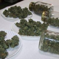 Variedades de marihuana medicinal para la venta.