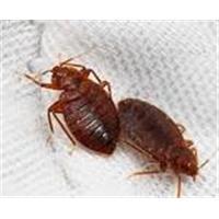 Exterminador de insectos, profesional. Osmany 54004343