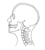 side view of head and neck, perfect posture