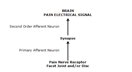 The brain perceives the electrical signal of pain.