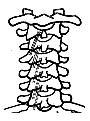 cervical spine - posterior view