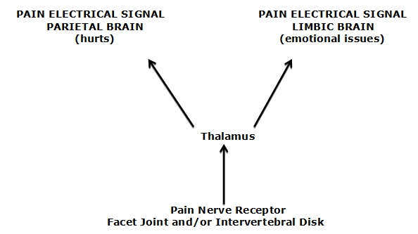 It is well understood and accepted that the pain electrical signal, on its pathway from the inflamed peripheral tissue to the (parietal) brain, also communicates with the limbic (emotional) brain. Consequently, in addition to hurting, pain also causes suffering and emotional problems, such as depression