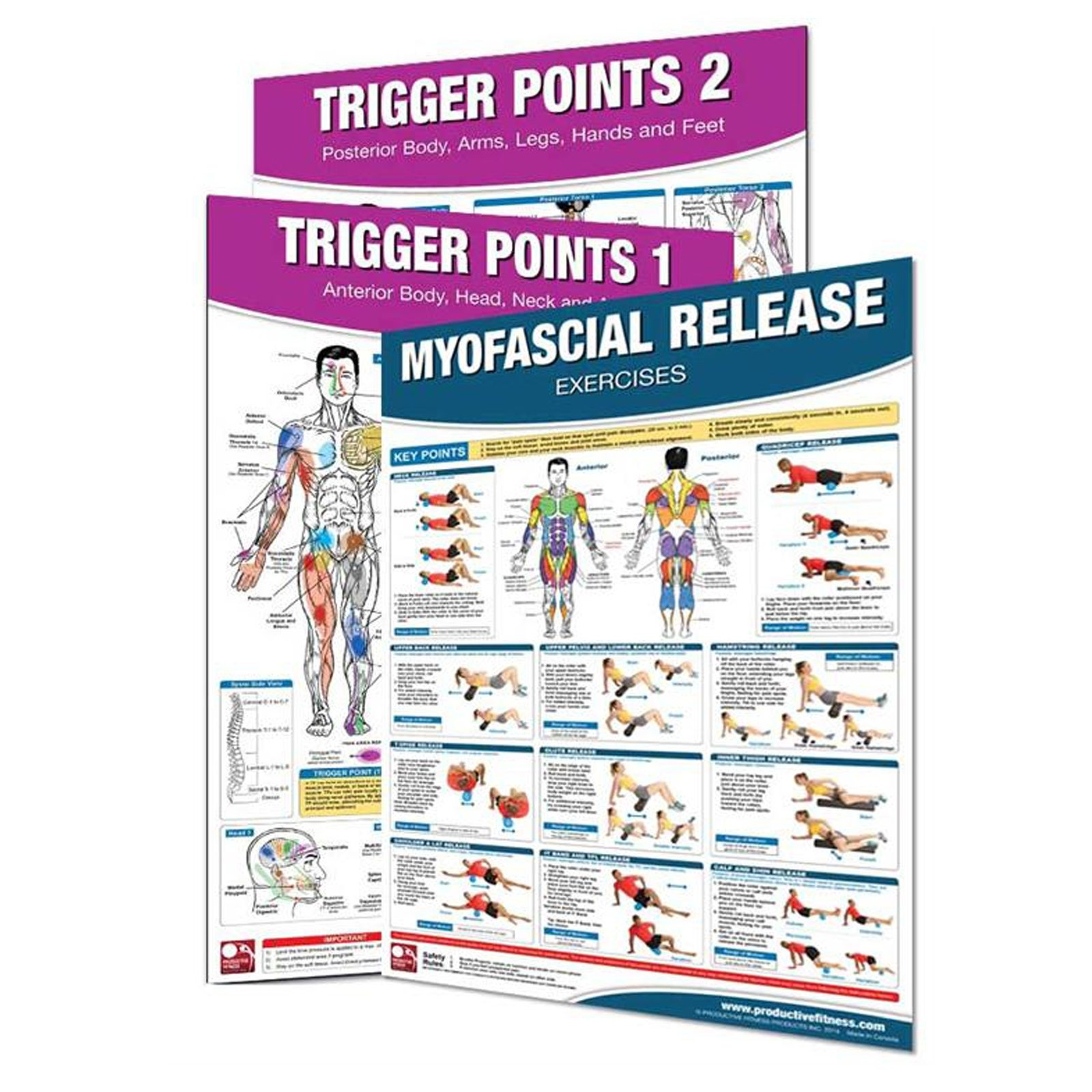 (3 Pack) Trigger Points and Myofascial Release Poster Set