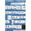 Fitness Poster Back And Core Dumbbell Exercises for Home use Laminated