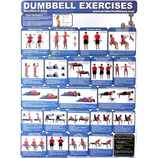 Laminated Poster Dumbbell Exercises for At Home Use Upper Body