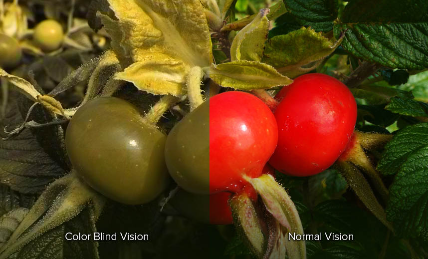 What Is Color Blindness Red Green Color Blindness