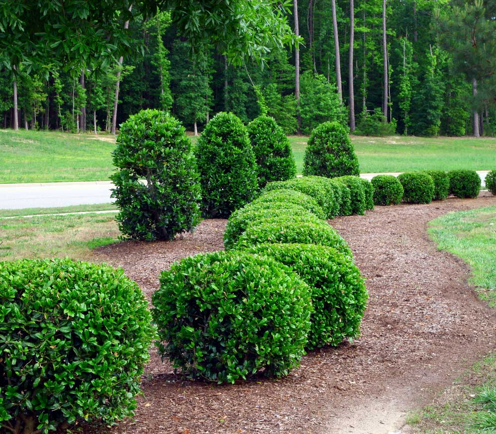 Trees shrubs merrill landscaping for Low bushes for landscaping