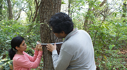 Measuring trees in the Western Ghat Forests