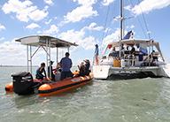 Snorkel for Queensland's Marine Mammals