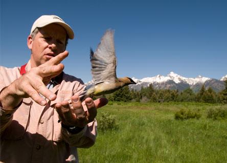 birds-colorado-research-science-earthwatch