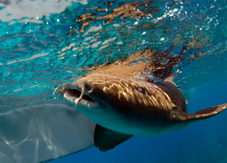 shark-research-science-conservation