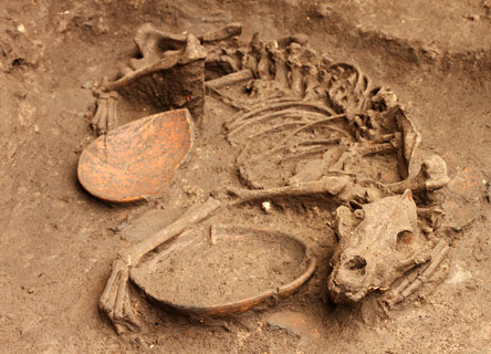 archaeology-science-research-excavation