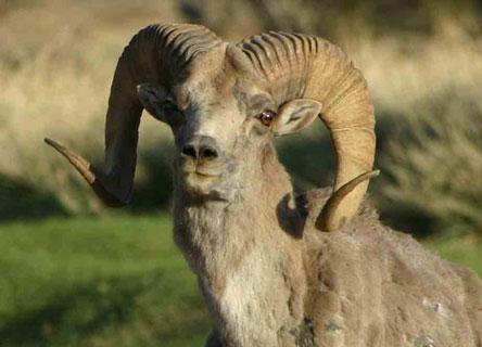 science-mammals-mongolia-earthwatch