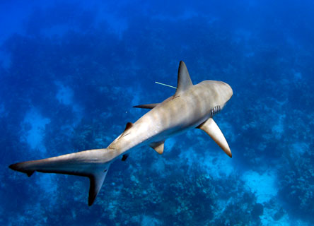 science-research-sharks-belize