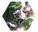 Earthwatch researchers tracking chimps in Budongo Forest, Uganda