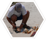 Earthwatch scientist measuring queen conch, Belize