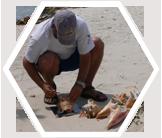 Earthwatch scientist measuring queen conch, Belize