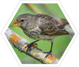 finch-research-science-galapagos