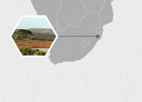 Hluhluwe-iMfolozi Park, South Africa