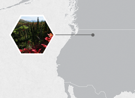 Flathead National Forest, Montana, U.S.