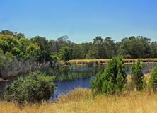 Freshwater turtle site, Melbourne, Victoria