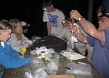 Volunteers weighing and measuring frogs