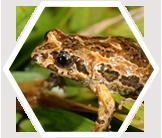 Frog in Australian Rainforest