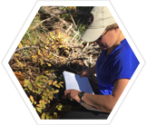 Assist in counting huckleberries to understand how changes in water, temperature, and pollination influence available food.