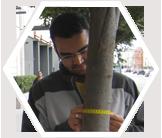 Tree measuring in San Francisco