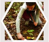 Climate and Landscape Change in Borneo's Rainforest