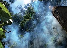 Borneo's Rainforests