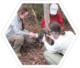 Researching volunteers, Emas National Park, Brazil