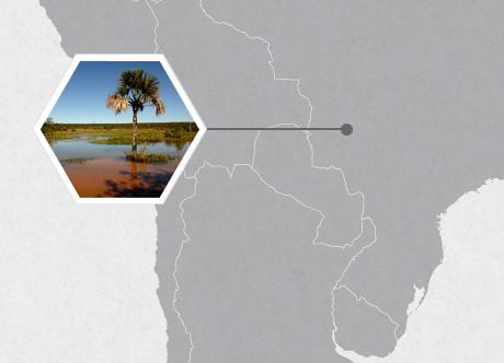 Emas National Park, Brazil