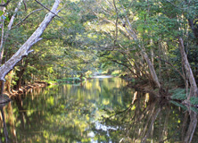 Creek, North Queensland, Austrlia